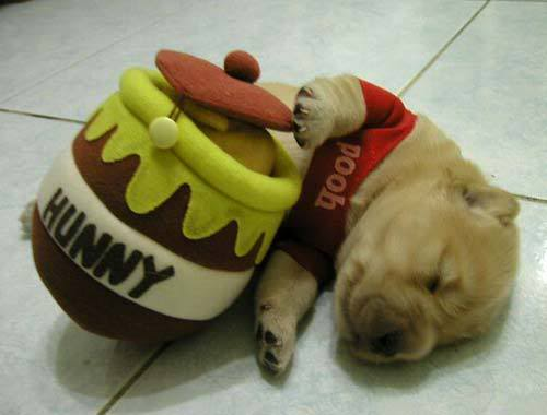 mi perro echandose un sueñito